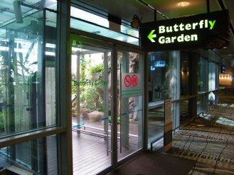 Butterfly_Garden_@_Changi_Airport,_Singapore_(4393230245)